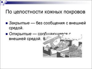 Классификация по целостности кожных покровов