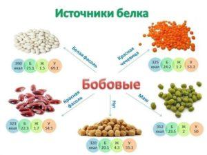 Источники белка при переломе