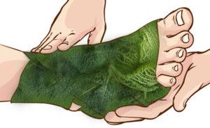 Капустный лист от отеков
